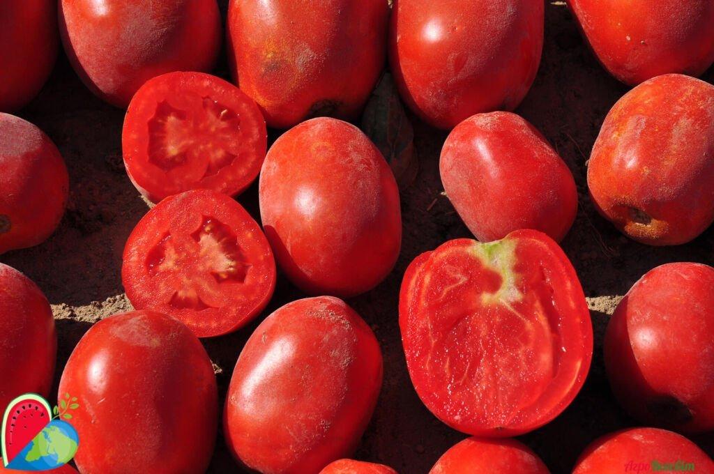 Капельный полив для томатов